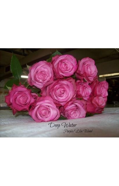 Букет из 101 розы сорта Cool Water