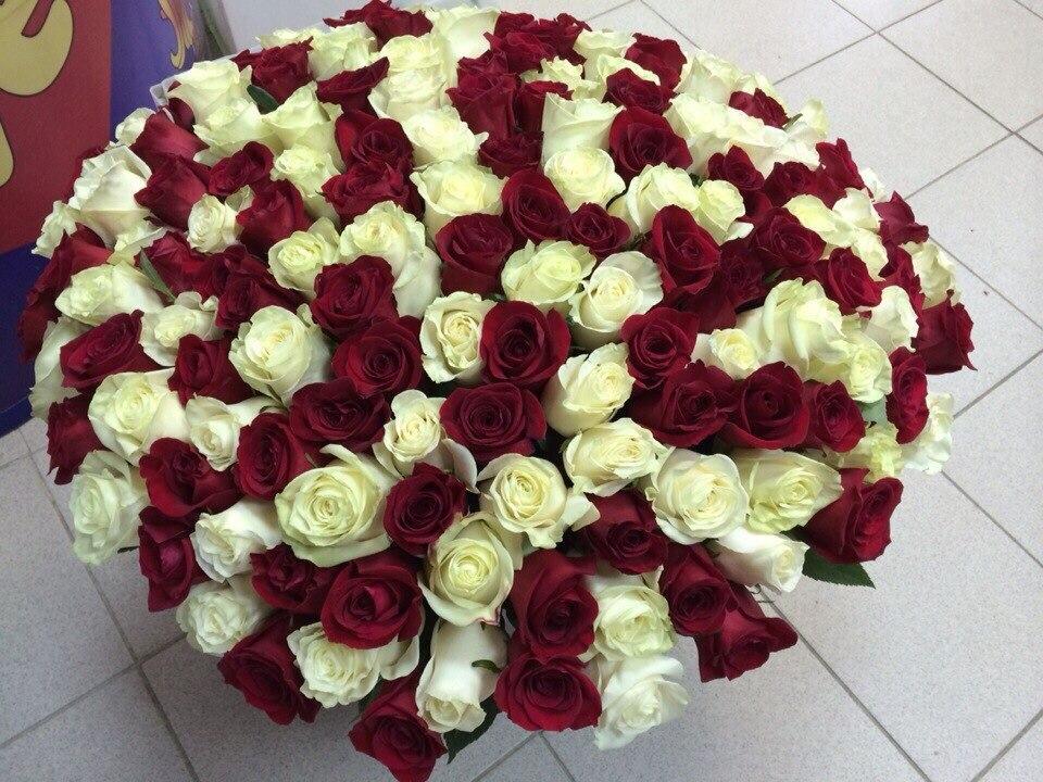 101 роза купить в Минске